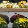 Sept 13th Market Day Photos