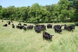 Local Farm Beef