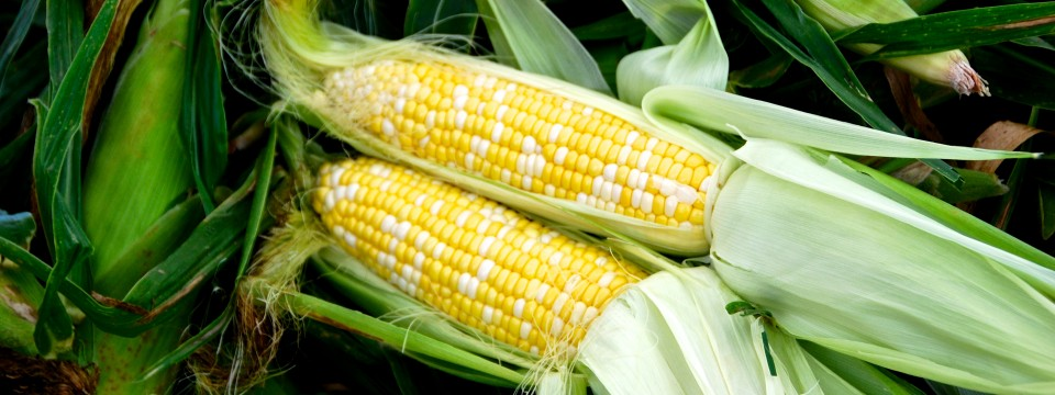 Tennessee Sweet Corn