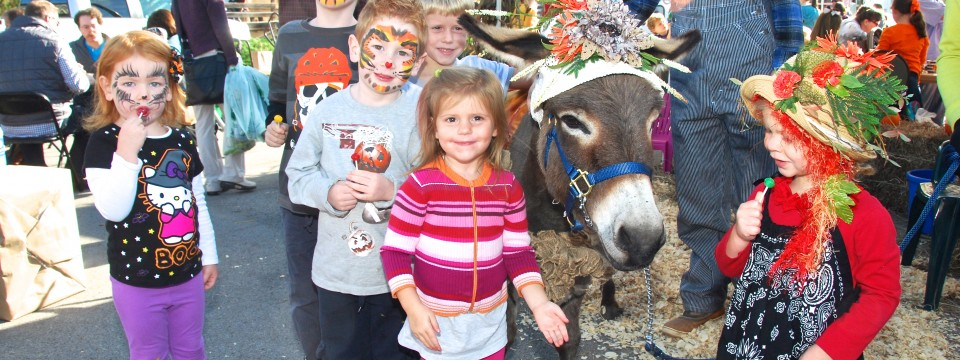 Paulette the Donkey