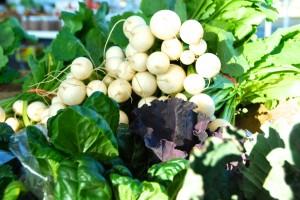 local radishes