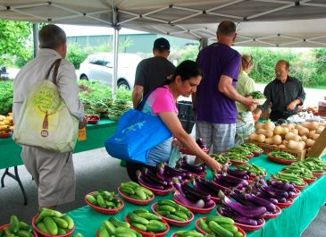 July 23rd Market Day Photos