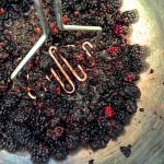local blackberries