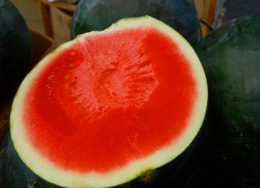 Watermelon Festival Photos August 27th