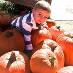 franklin pumpkin patch