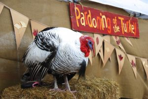 Danny the Turkey hopes for another Pardon from Franklin Mayor Ken Moore