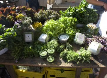 May 19th Market Day Photos