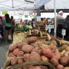 August 22nd Market Day Photos