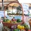 August 8th Market Day Photos