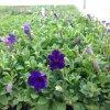 image kirkview-farm-2-jpg
