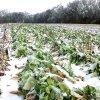 image delvin-farms-1-jpg