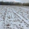 image delvin-farms-18-jpg