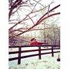 image ice-trees-jpg