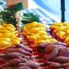June 14th Market Day Photos