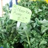 March 19th Market Day Photos