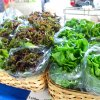 March 26th Market Day Photos