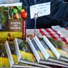 March 7th Market Day Photos