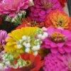 image img_0354-jpg