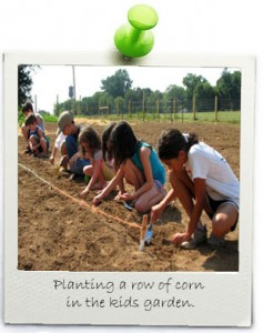 planting-in-a-row-corn-kids-garden