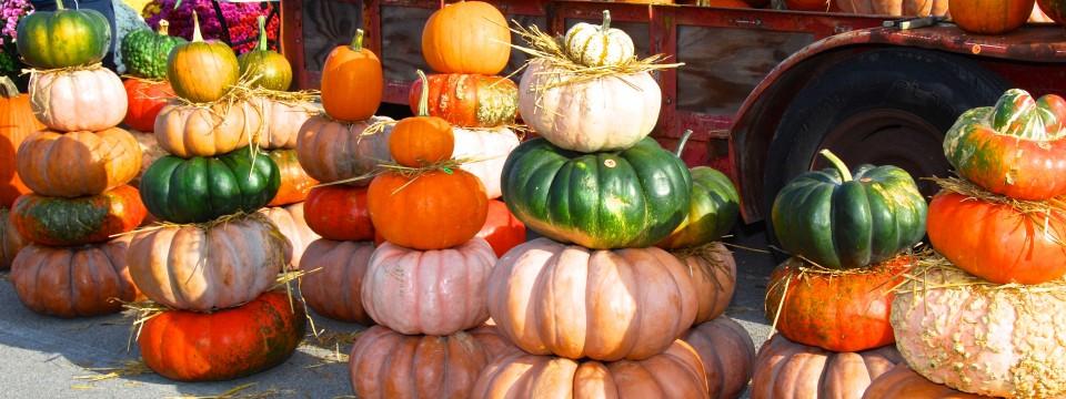 Tennessee Heirloom Pumpkins