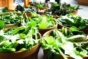 farm lettuce mix