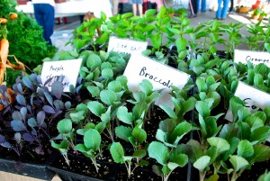Vegetable Starter Plants from Paradise Produce